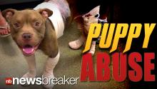PUPPY ABUSE: Man Arrested for Strapping Fireworks to Pitbull; Dumping Him in Alley