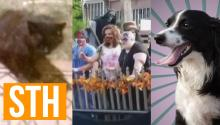 Feral Cat Terrorizes Town, Zombie Parade Upsets Mom, Talking Dog PSA!