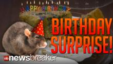 BIRTHDAY SURPRISE: 96 Year Old Discovers Dead Rat Baked into His Cake