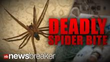 DEADLY SPIDER: Man Dies of Complications From Brown Recluse Bite