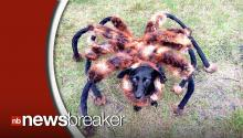 Mutant Spider Dog Prank Is Both Hilarious And Terrifying