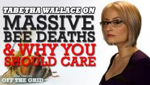 Tabetha Wallace & Jesse Ventura on Massive Bee Deaths & Why You Should Care