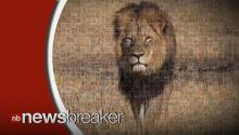 Zimbabwean Men Who Assisted American in Killing Cecil the Lion Released on Bail