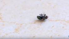 The Breakdancing Fly