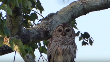 The Chillest Owl In History