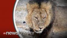 Cecil the Lion's Cubs Not Feared To Be In Danger As Many Call For Walter Palmer's Extradition