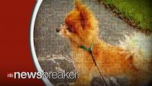 Florida Family's Pomeranian Found Dead With Note Saying He Was Kicked to Death