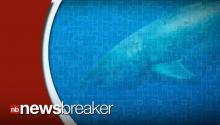 WHOA: Largest Great White Shark Ever Recorded Caught On Film! (WATCH)