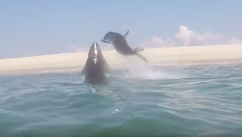 Seal B**** Slaps Shark In Mid-Air