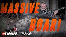 HUGE BOAR: Man Catches 500 Pound Beast in North Carolina; Enough Meat to Feed Family for a Year
