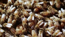 Beekeeper: The Fight To Save The Mighty Honeybee