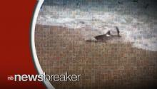 Real Life Sharknado Scene as Sharks Beach Themselves on North Carolina Shore!