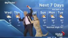 This Is Why Every Weatherman Should Do His Job With A Dog...