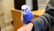 A Talking Bird Isn't Cool. Know What's Cool? Bird Doing An Impression Of R2-D2.