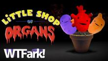 LITTLE SHOP OF ORGANS: I Heart Guts Sells Plush Organs To Kids! Organs Like Testicles! And Rectums! And Mammary Glands! Fun For The Whole Family!