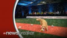 This Dog Completely Fails an Obedience Competition--in the Most Hilarious Way