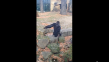 That Awkward Moment When You're Filming A Gorilla At The Zoo And He Throws A Giant Rock At You