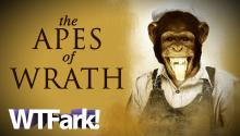 THE APES OF WRATH: Chimps Escape Zoo (Sort Of), Public Cowers in Fear (Not Really)