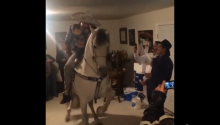 Man + Sombrero + Toddler + Dancing Horse = Best House Party Ever