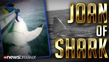JOAN OF SHARK: 16 Foot Great White Found Lurking Off Coast of Australia Could Be Biggest Ever Found