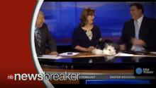 TODAY'S LOL: Two Easter Bunnies Do What Bunnies Do on Live TV