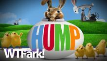 HUMP: Harmless Morning News Segment Suddenly Turns Into Uncomfortable Live TV Bunny Porn